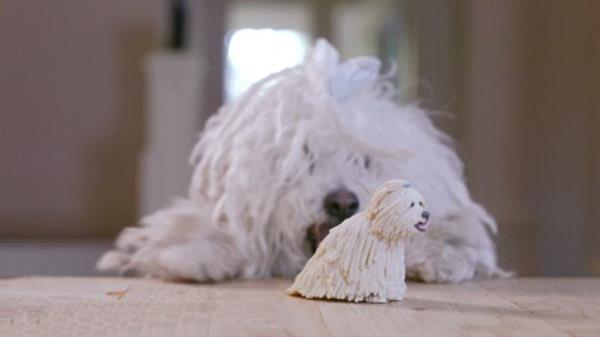 这就是让爱犬一脸懵逼的礼物