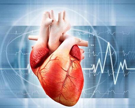 心脏结构图解释